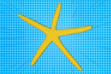 Illustration of a yellow starfish against a blue background