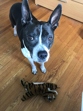 Pepper, the dog